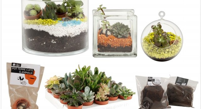 deco creer un terrarium avec succulentes nature et decouvertes joli place. Black Bedroom Furniture Sets. Home Design Ideas
