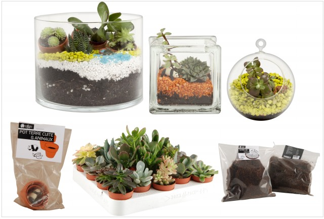 Les succulentes des plantes tr s d co joli place for Pot de plante design