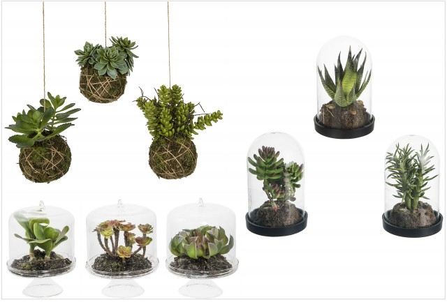 les succulentes des plantes tr s d co joli place. Black Bedroom Furniture Sets. Home Design Ideas