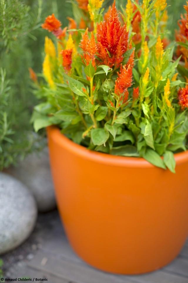 Un salon de jardin color joli place for Pot colore exterieur