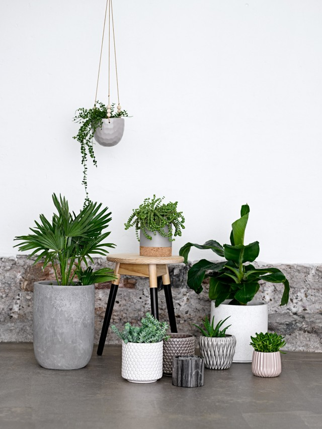 Des inspirations d co pour mettre en valeur vos plantes vertes for Decoration maison la redoute