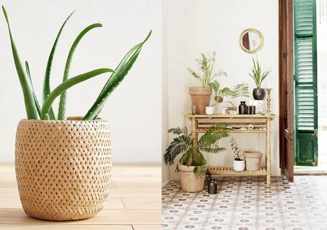 Plantes vertes dans la maison