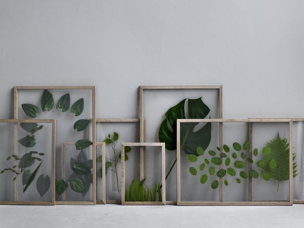 Cadre transparent pour herbier