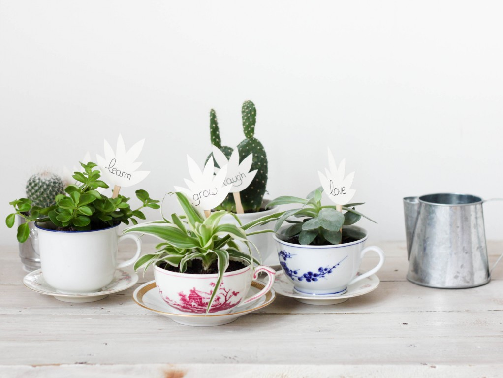 Mini pots cactus et succulentes
