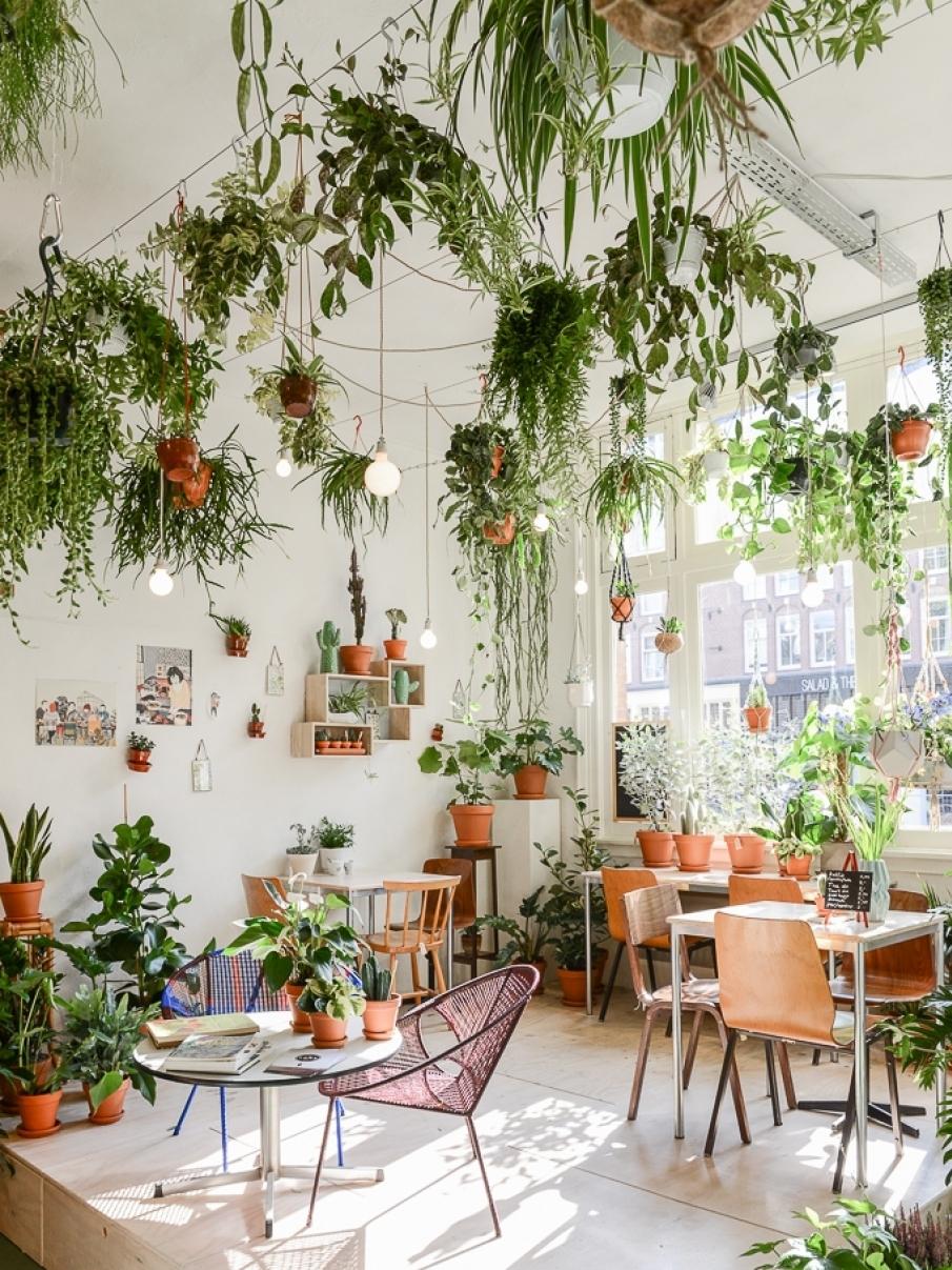 d co v g tale ces lieux atteints par la jungle fever joli place. Black Bedroom Furniture Sets. Home Design Ideas