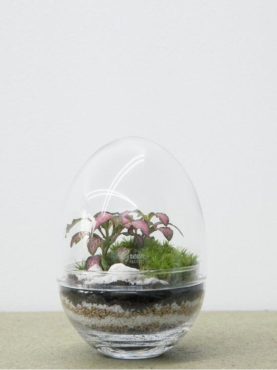 Décoration plantes vertes : des cadeaux pour green addict - Joli Place