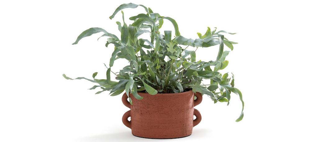 cache-pot céramique terracotta